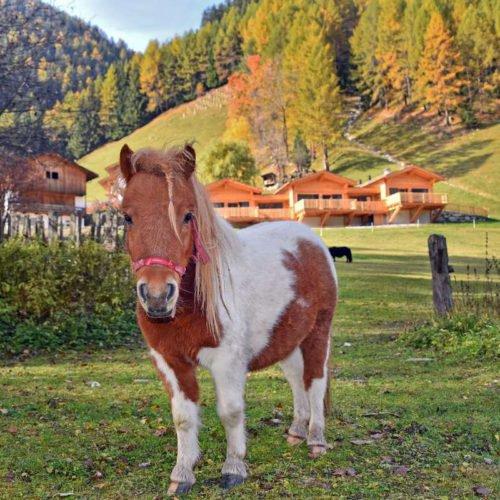 chalet leitner ferienregion gitschberg jochtal (54)