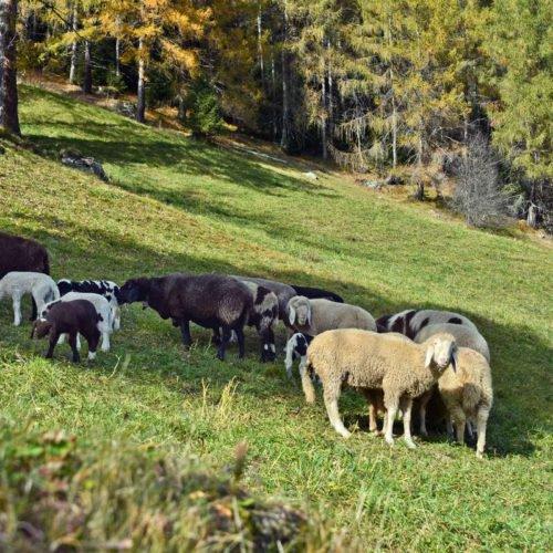 chalet-leitner-regione-turistica-gitschberg-jochtal-36